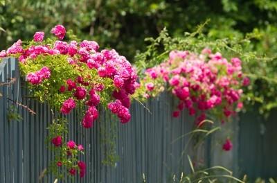 Wunderschöne Gestaltung Ihres Gartens